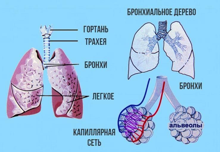 трахеит у беременных лечение