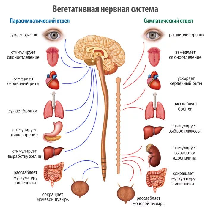 соматоформная вегетативная дисфункция что это такое