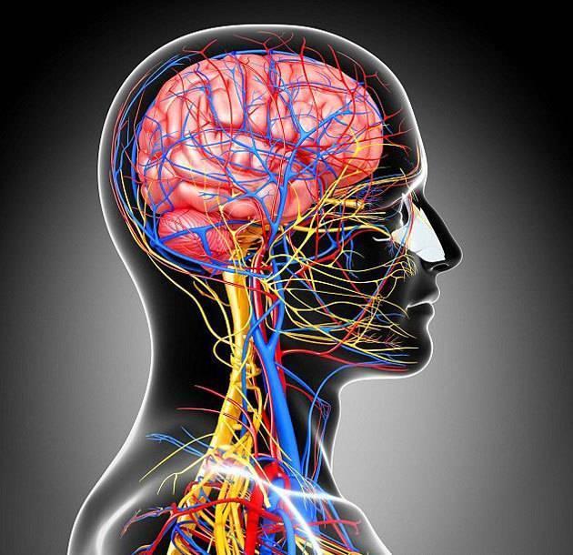 Нестенозирующий и стенозирующий атеросклероз брахиоцефальных артерий