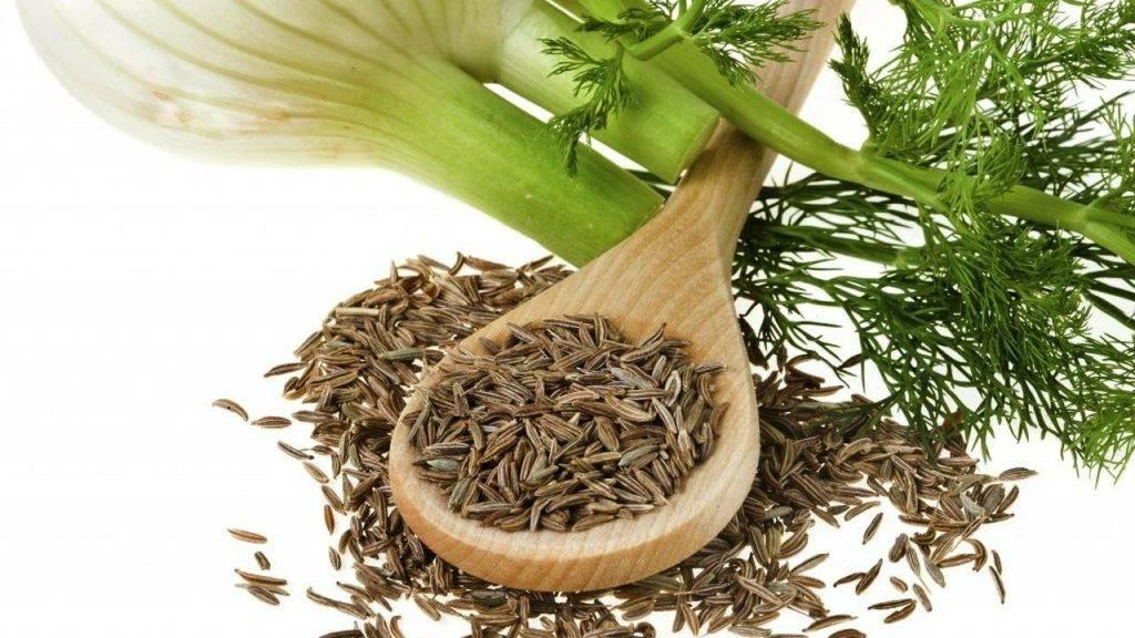 Семена укропа при лечении цистита — полезные свойства и применение
