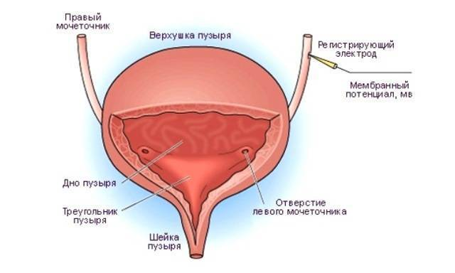 Посткоитальный цистит — симптомы и лечение