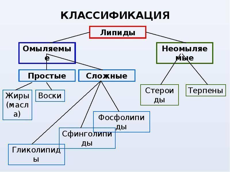 классификация и строение липидов