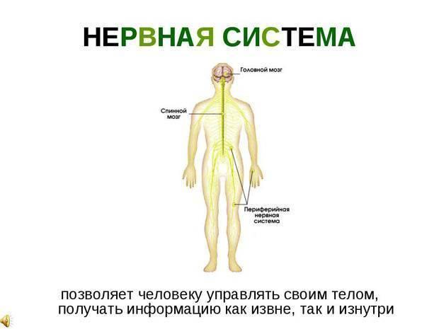 Соматоформная дисфункция вегетативной нервной системы - симптомы болезни, профилактика и лечение соматоформной дисфункции вегетативной нервной системы, причины заболевания и его диагностика на eurolab