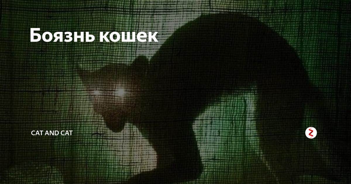 Айлурофобия: боязнь кошек