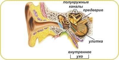 Лабиринтит: причины, симптомы, диагностика и лечение