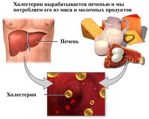 выработка холестерина в печени