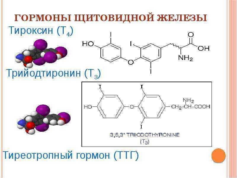 Тиреотропный гормон повышен – что это значит?