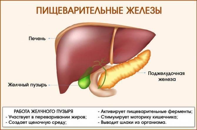 Застой желчи: симптомы, лечение застоя в желчном пузыре