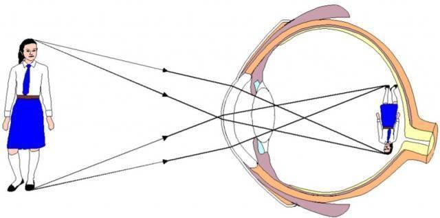 сколько кадров в секунду воспринимает глаз