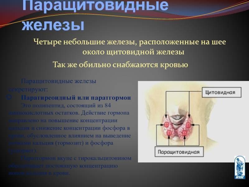 Паратиреоидный гормон: основные функции и симптомы нарушений в выработке
