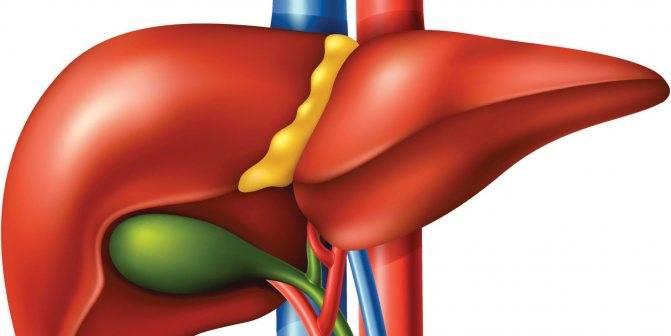 Причины утолщения стенок желчного пузыря