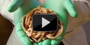 Причины появления паразитов в желудке