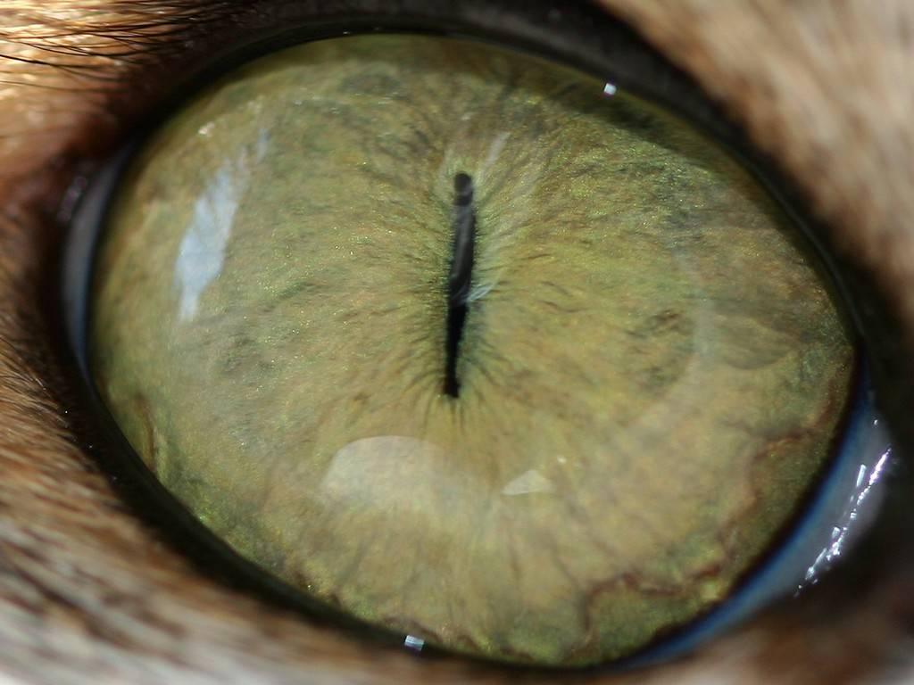 паразиты в глазах человека