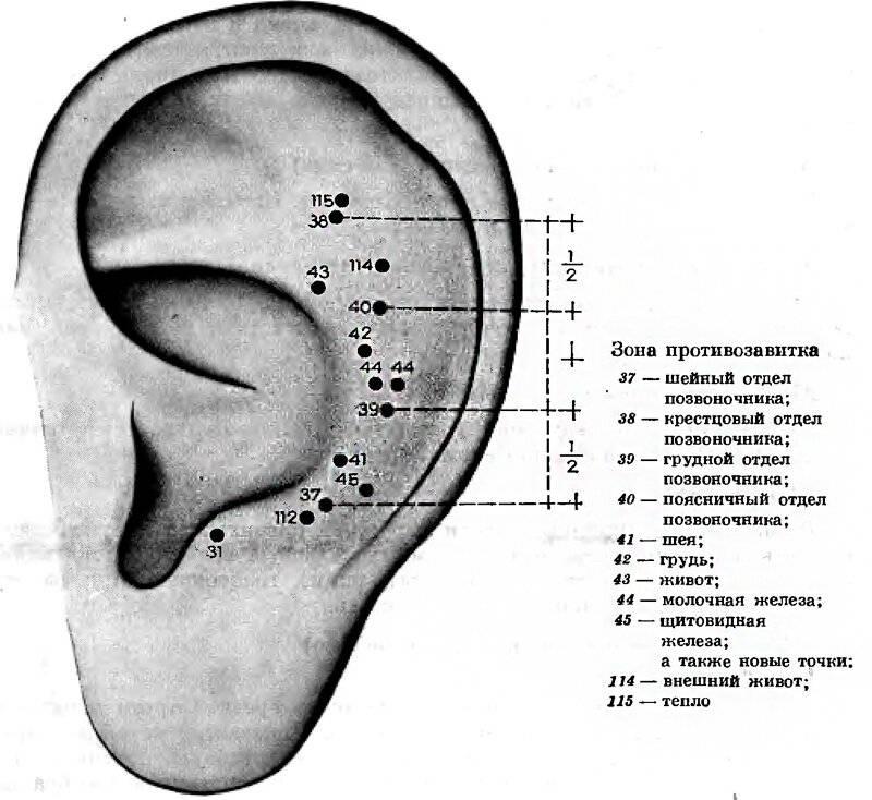 Схема и массирование акупунктурных точек на ушах