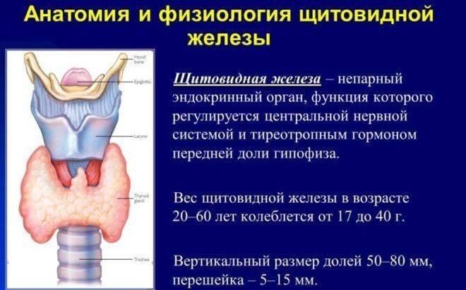пониженные гормоны щитовидной железы