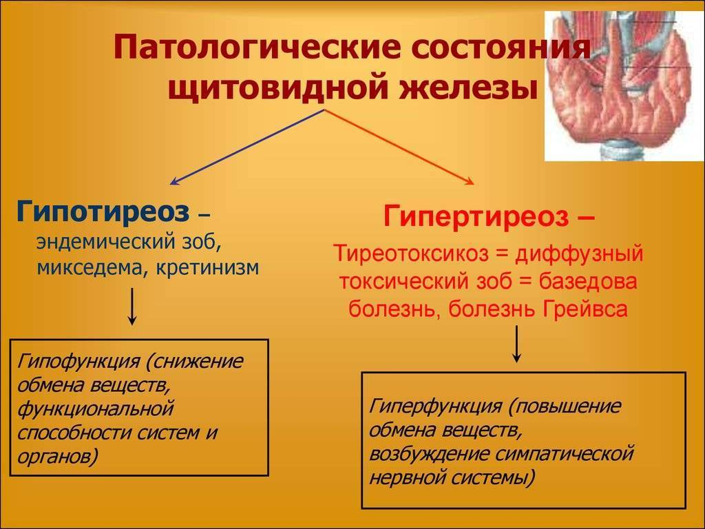 Маленькая щитовидная железа: что это значит