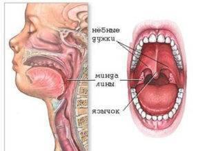 Причины и методы устранения неприятного запаха из носоглотки