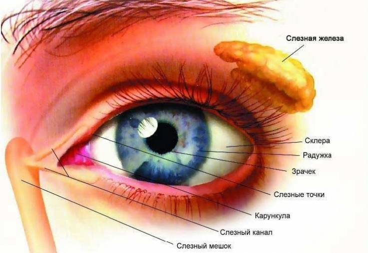 Дакриоаденит - описание болезни