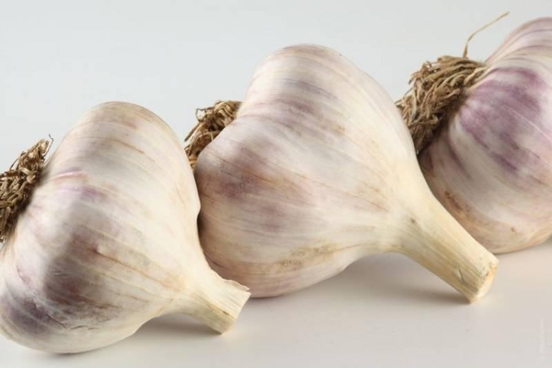 17 побочных эффектов чеснока, о которых вы должны знать