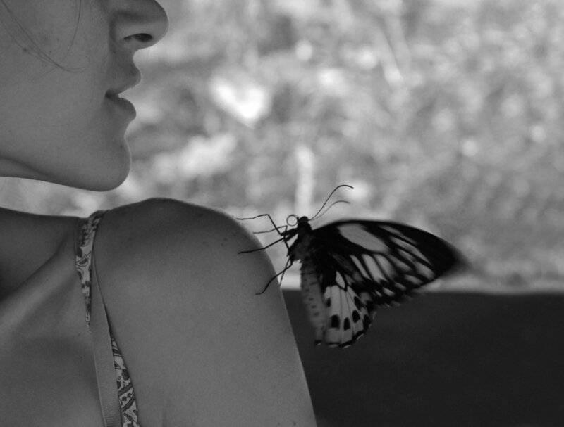 Лепидоптерофобия, или фобия бабочек