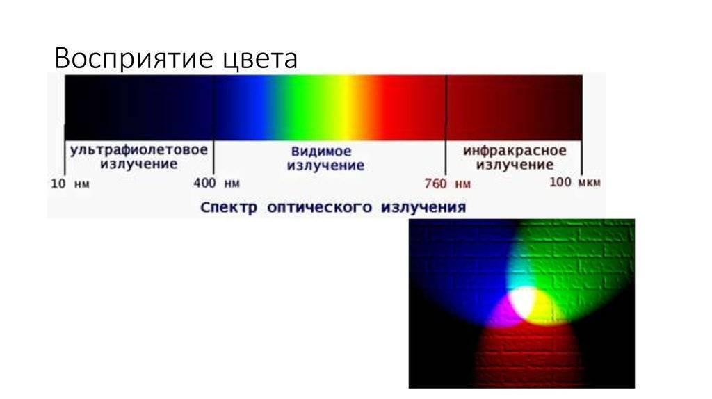Цвет и зрение человека