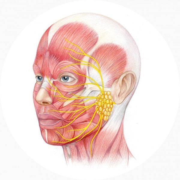 Неврит лицевого нерва: симптомы