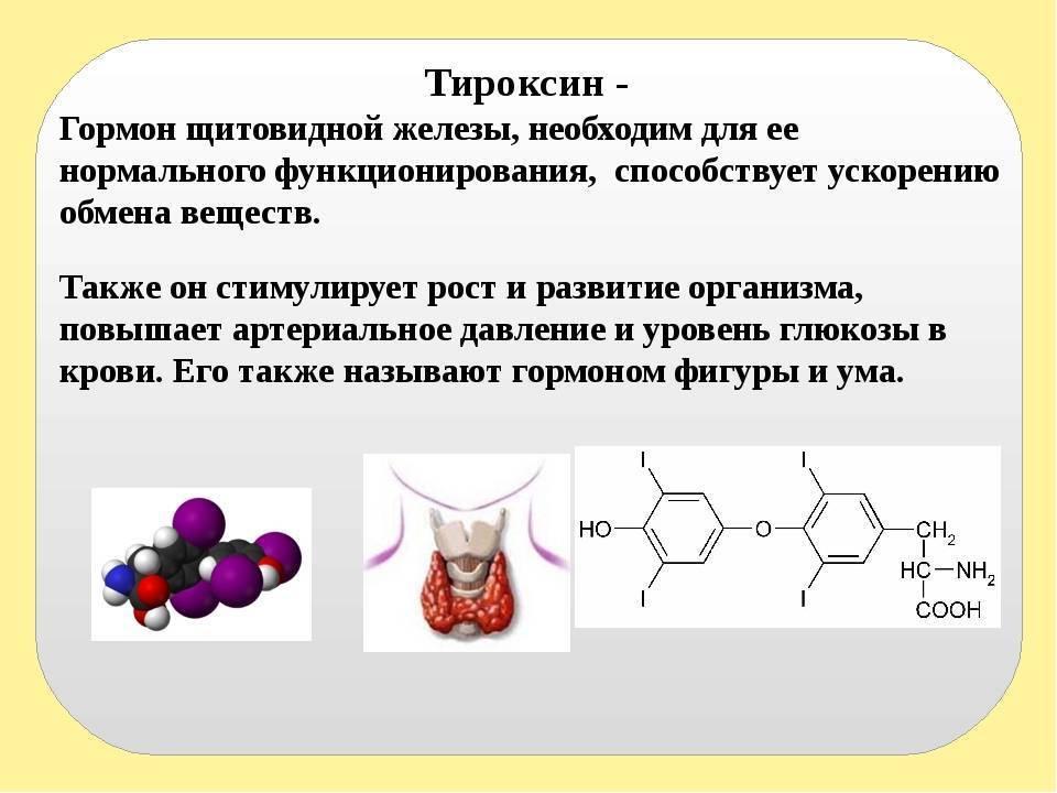 Гормоны щитовидной железы в таблетках. обзор гормонов щитовидной железы в таблетках гормоны щитовидной железы препараты список