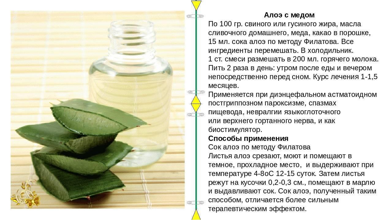 Мед и алоэ: эффективные рецепты против кашля