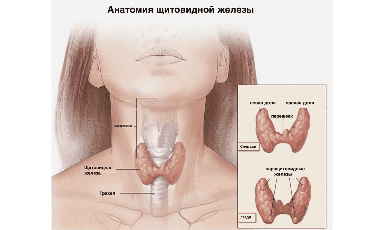 Ком в горле щитовидная железа лечение народными