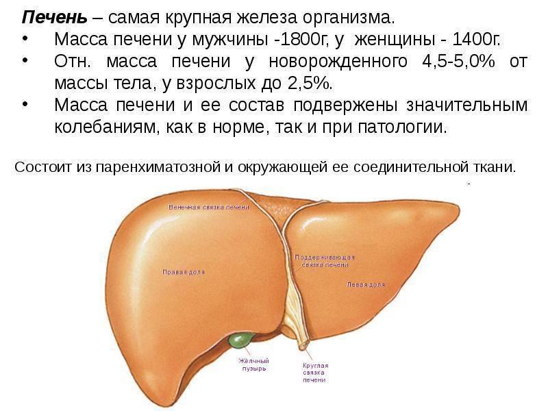 Лечение увеличенной печени народными средствами и лекарствами