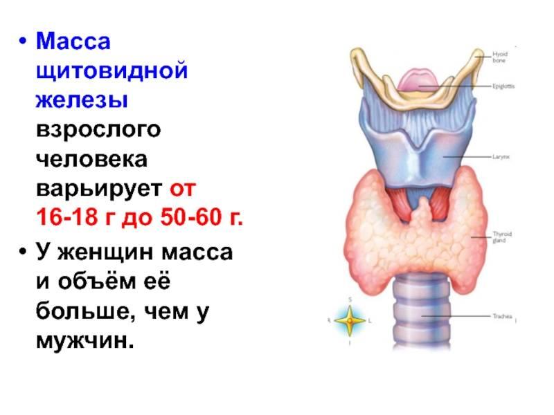 Аденома паращитовидной железы — википедия. что такое аденома паращитовидной железы