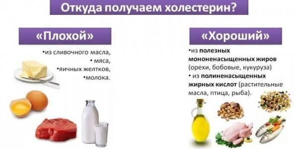 Роль жиров в питании, холестерин