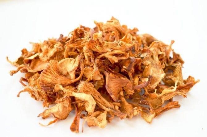 Как принимать грибы лисички от паразитов: рецепты для лечения глистов в домашних условиях - lechilka.com