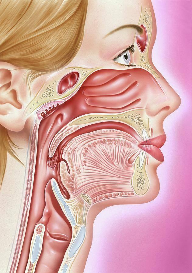 Воспаление горла и гортани: лечение. что делать при воспалении?