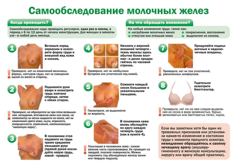 сроки проведения самообследования молочных желез