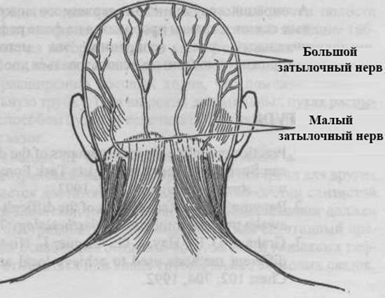 Основные симптомы и способы лечения невралгии затылочного нерва