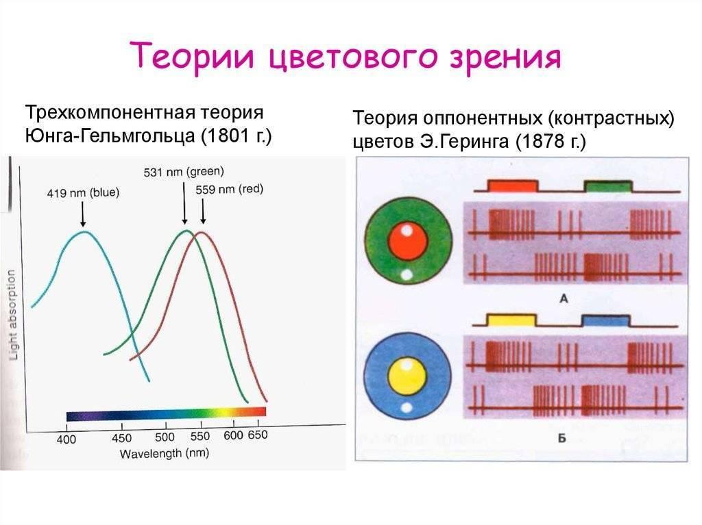 Трихроматизм (цветное зрение)