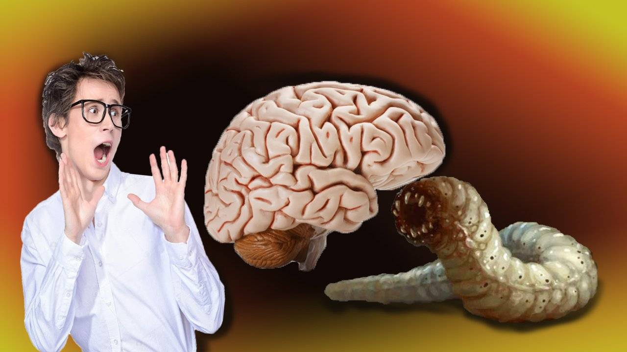 черви в мозгу человека