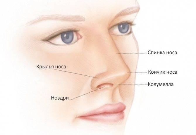 Что форма носа расскажет о вашем характере и личной жизни