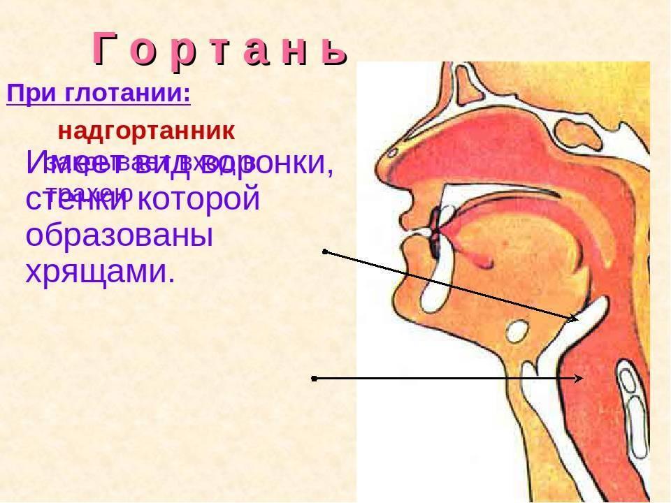Воспалились лимфоузлы на шее. боль в горле при глотании. отдаёт в уши.