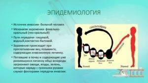 Цикл жизни аскарид в развитии от яиц до взрослых особей. личинка аскариды - миграция, развитие в организме человека