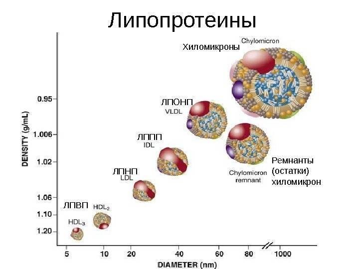 Липопротеиды высокой плотности повышены