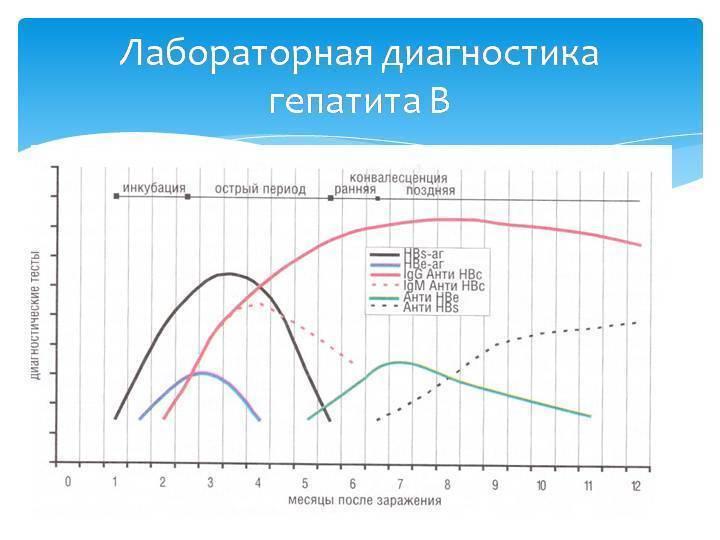 Анализ крови на маркеры гепатитов в и с: показания, подготовка и расшифровка результатов