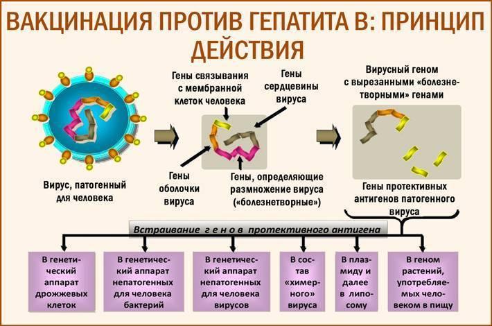 прививка от гепатита противопоказания