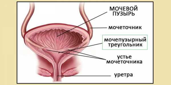 Отличие уретрита от цистита у женщин