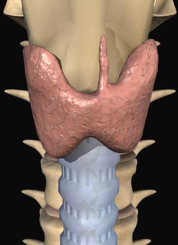 Лечение заболеваний щитовидной железы народными средствами