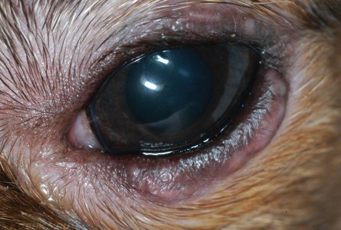 белки глаз мутные что это