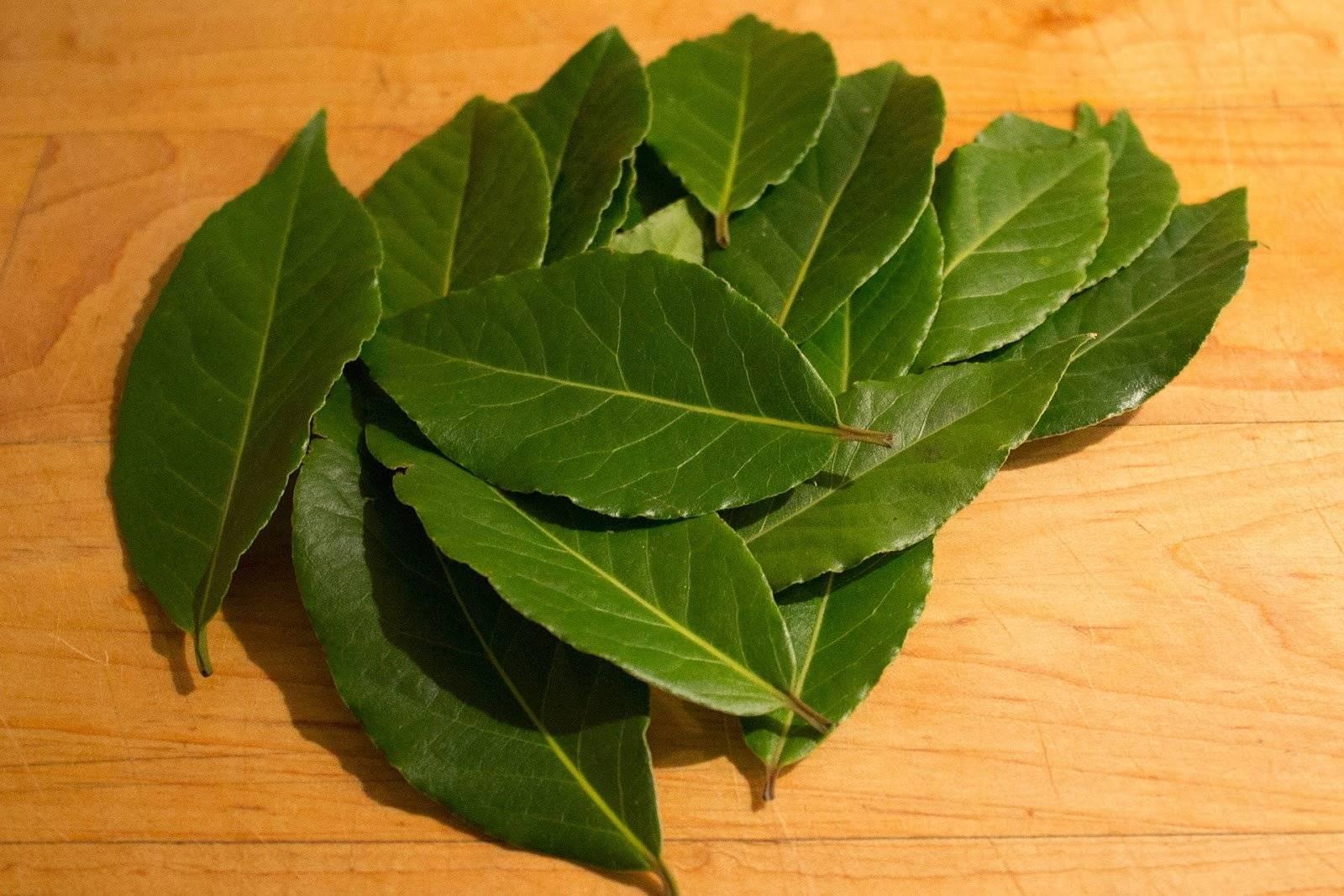 Рецепты лечения геморроя лавровым листом