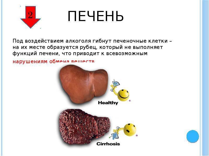 влияние алкоголя на печень человека
