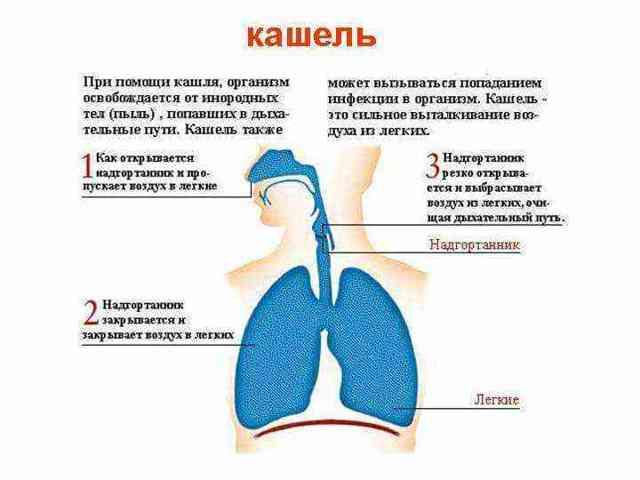 Лающий кашель – чем опасен симптом, и как быстро от него избавиться?